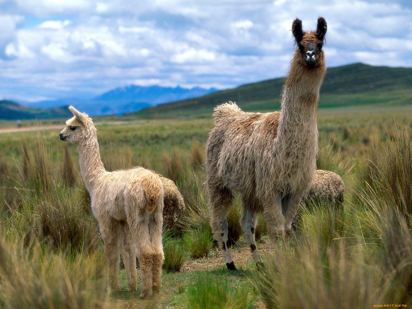 фото животных южной америки книге изложено много